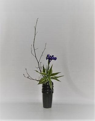 <黒文字 ダッチアイリス ドラセナ・サンデリアーナ> Kumikoさんの作品です。