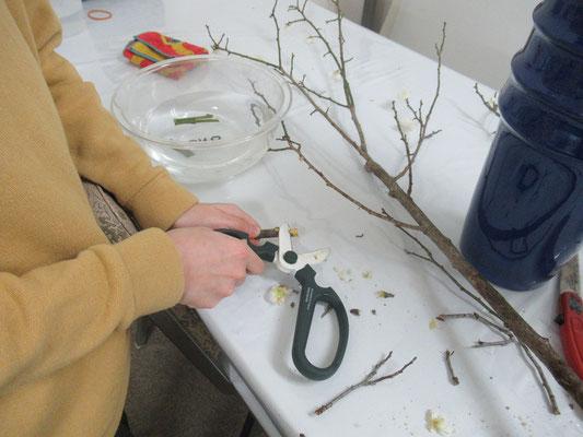 太くて堅い枝を器用に削るRikuくん。枝を固定する留め木を作っています。