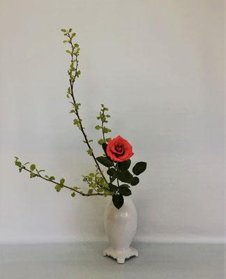 4/17 <金葉こでまり 薔薇> Kumikoさんの作品です。