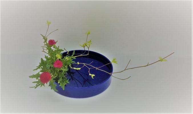 5/23 <オタルモミジ 薊> Kumikoさんの作品です。