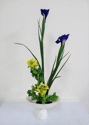 2021.2.10 <アイリス 菜の花> Ittsuちゃんの作品です。研究会課題をお稽古しました。