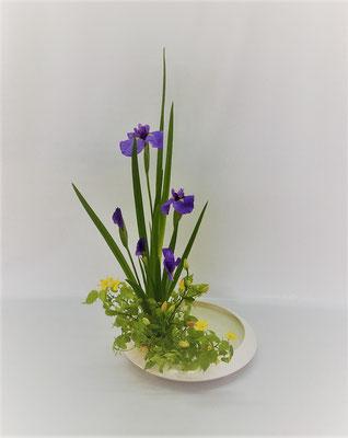 5/30 <花菖蒲 姫百合(オレンジココット) 山吹> 花菖蒲の色彩盛花様式本位のお稽古です。花菖蒲のはつらつとした姿とは対照的な百合の蕾が愛らしい。Tamikoさんの作品です。