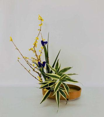<連翹(レンギョウ) ダッチアイリス ドラセナ・サンデリアーナ> 初めての盛花。直立型のお稽古花はChiakiさんの作品です。