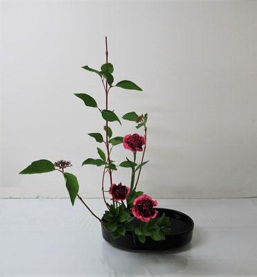 2020.9.2 <珊瑚水木(サンゴミズキ) カーネーション 丸葉ルスカス> Hinanoちゃんの作品です。