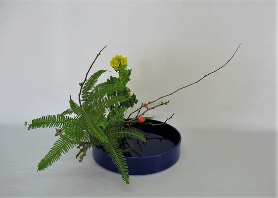 2021.2.9 <木瓜 菜の花 山シダ> Kumikoさんの作品です。写景盛花、自然本位。2月研究会の課題をお稽古しました。