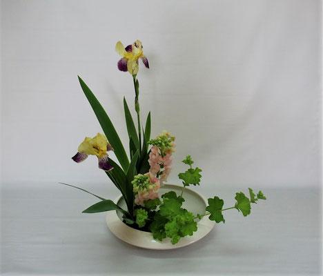 2020.6.9 <ジャーマンアイリス スナップドラゴン アルケミラ・モリス> Chiakiさんの作品です。色彩盛花・様式本位