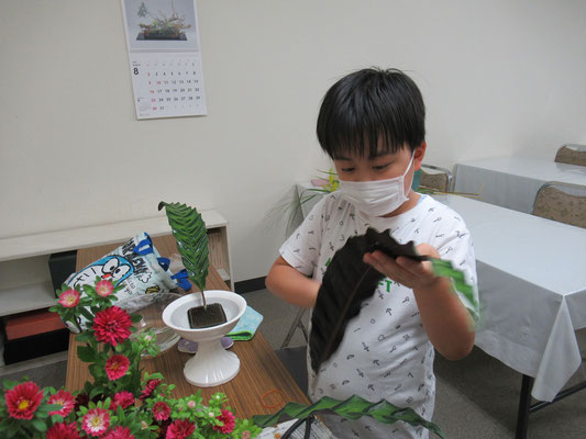 カラテアは、葉の模様がとても個性的な観葉植物です。