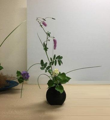 <唐糸草(カライトソウ) 紫陽花 糸薄(イトススキ)> 野の花の風情たっぷり、桂籠に。