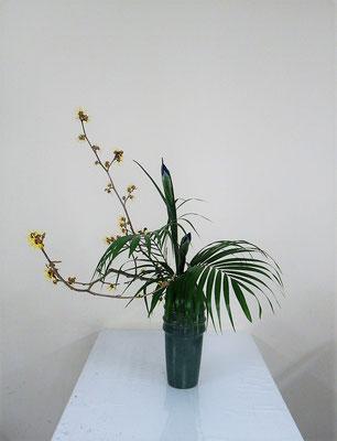 2021.2.24 <万作 ダッチアイリス アレカヤシ> Katsurakoさんの作品です。瓶花傾斜型のお稽古です。