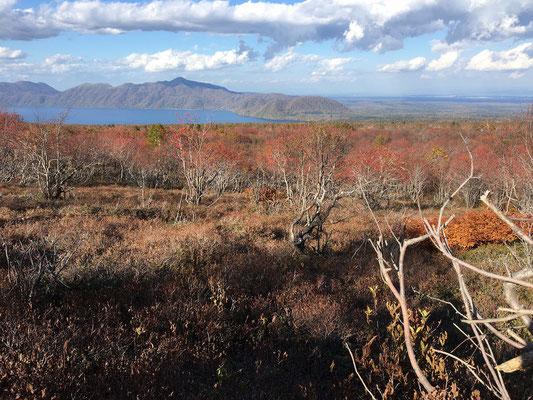 すっかり落葉したナナカマドは赤い実だけがたわわとなり支笏湖を背景に溜息の出る美しさ。