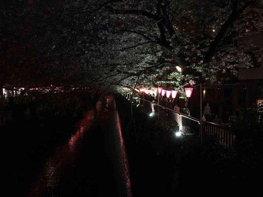 2018.4.2 この時期の有名なスポット。TVで何度も見たことがある「目黒川桜まつり」。実際に歩いてみました。