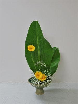2019.7.3 <糸芭蕉(イトバショウ) ガーベラ かすみ草> Yayoiさんの作品です。花展に出しても良いような作品に仕上がりました。が、花材の包みを開いた時は大きな葉を見てビックリ、一瞬フリーズしたような様子のYayoiさんでした。