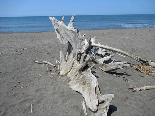 こんなオブジェ、いかがでしょうか? まるで恐竜の背中のような流木。大自然をテーマにこのままいけてみたいなア!