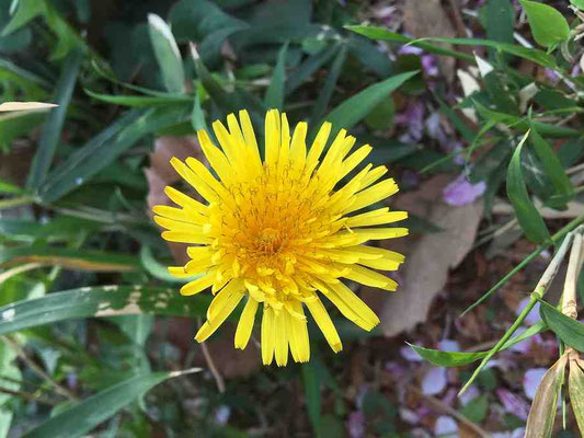 園内は早くも春の花が盛りです。