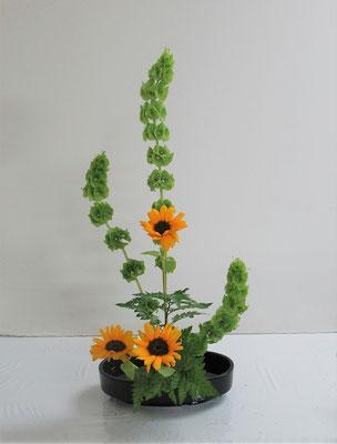 2020.6.17 <モルセラ 向日葵(ヒマワリ) レザーファン> Hinaちゃんの作品です。久々のたてるかたちを小判型花器にいけました。堂々としてとても伸びやかです。