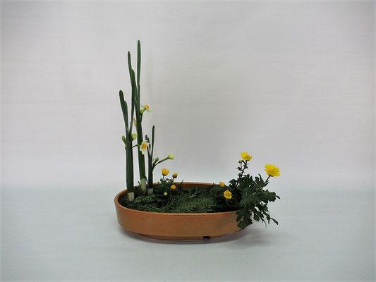 2020.12.8 <水仙 小菊 下草> Chiakiさんの作品です。水仙が手に入りましたので、まずは写景盛花・様式本位のお稽古です。