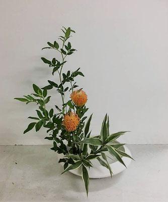 <素馨(ソケイ) ピンクッション ドラセナ・サンデリアーナ> Chiakiさんの作品です。盛花、直立型のお稽古です。ピンクッションは、その名の由来通りたくさんの可愛らしい針が刺さっているように見えます。
