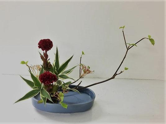 2018.7.4 <虫狩(ムシカリ) 鶏頭(ケイトウ) ドラセナサンデリアーナ> Eunjuさんの作品です。枝物でしたので小判型花器にかたむけるかたちを堂々と。