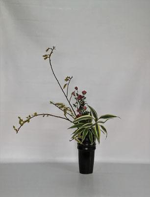 <キブシ 小菊 ドラセナ・サンデリアーナ> Chiakiさんの作品です。瓶花傾斜型のお稽古です。