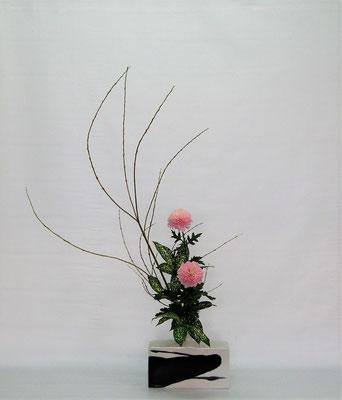 2020.11.10 <行李柳 菊 ゴッドセフィアナ> Chiakiさんの作品です。