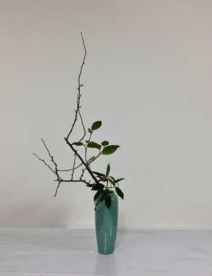 <木瓜(ボケ) 椿> 木瓜と椿の瓶花のお稽古花です。