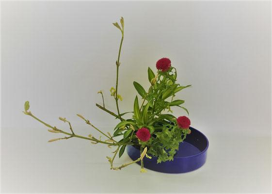 <ウリハダカエデ 薊 ドラセナ> Tamikoさんの作品です。ウリハダカエデの芽吹きを傾斜型でいけてくれました。