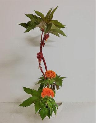 <唐胡麻(トウゴマ) 鶏頭(ケイトウ)> Akikoさんの作品です。トウゴマの大きな葉の表情に気をつけながら枝どりをしました。