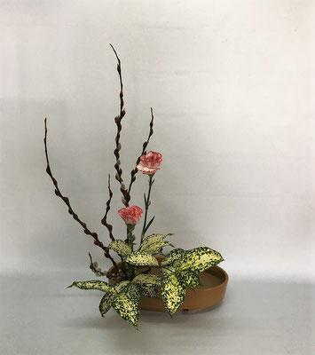 <赤芽柳 カーネーション ゴッドセフィアナ> by Michiyoさん