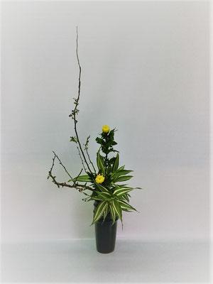 <木瓜 中菊 ドラセナ・サンデリアーナ> Tamikoさんの作品です。