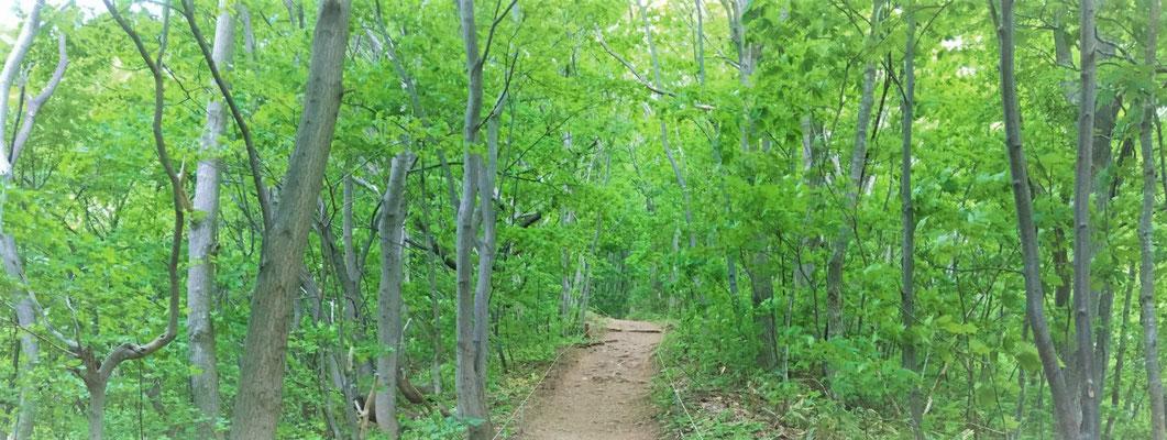 190万都市札幌の市街地に、ひっそりと静まり返る森の小径。
