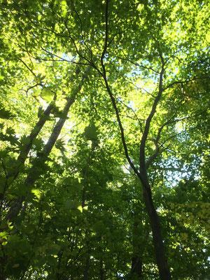 木漏れ日がキラキラ。