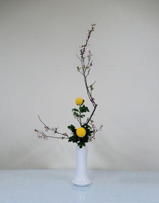 2020.4.15 <紅李(ベニスモモ) オランダ玉菊> Katsurakoさんの作品です。
