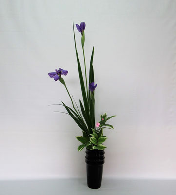 2019.5.28 <花菖蒲 撫子(ナデシコ) 鳴子百合(ナルコユリ)> Kumikoさんの作品です。花菖蒲がお花屋さんにありましたのでお稽古しました。花菖蒲は近くのお花屋さんではほとんど見かけませんので、ラッキーでした。