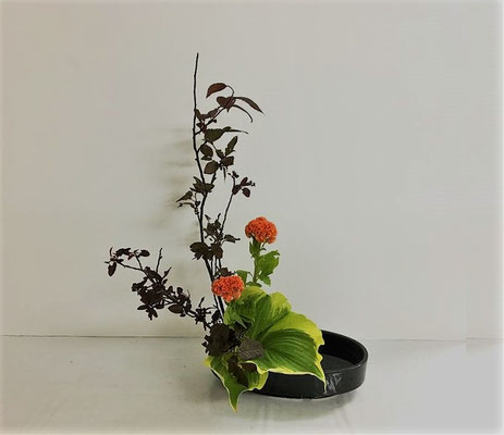 2018.6.13 <紅李(ベニスモモ) 鶏頭 斑入り擬宝珠> Yukiさんの作品です。盛花 直立型