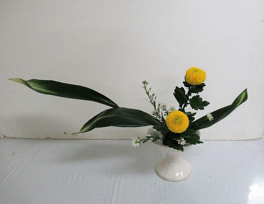 2020.11.4 <旭葉蘭(アサヒハラン) ピンポン菊> Katsurakoさんの作品です。研究会の課題をお稽古しました。
