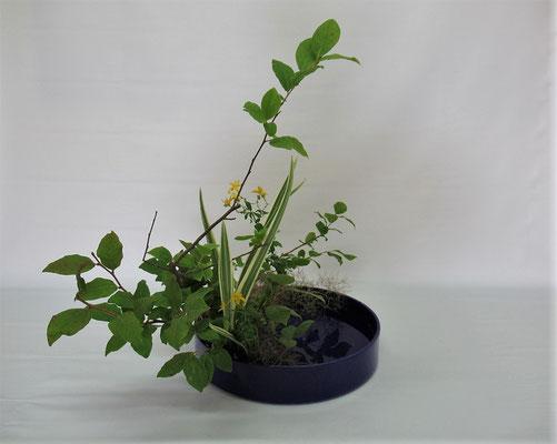 2020.7.14 <夏ハゼ 弟切草(オトギリソウ) キキョウラン スモークツリー> Chiakiさんの作品です。キキョウランを著莪に見立てて写景盛花のお稽古をしました。陽気な夏の山野のイメージです。