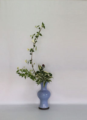 <梅花空木(バイカウツギ) 芍薬 ドラセナ・サンデリアーナ> Kumikoさんの作品です。