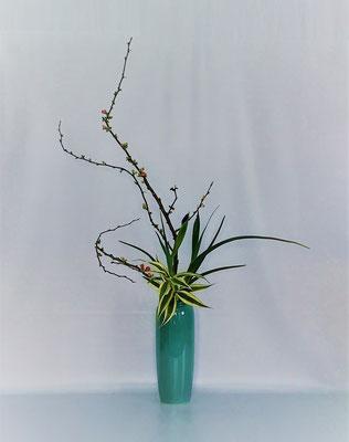 <木瓜 ダッチアイリス ドラセナ・サンデリアーナ> Kumikoさんの作品です。木瓜の枝ぶりを最大限に生かそうと考えました。写真では2本並んでいるように見えるアイリスは、実際は前後の間隔がありスカッと洒落た出来栄えでした。