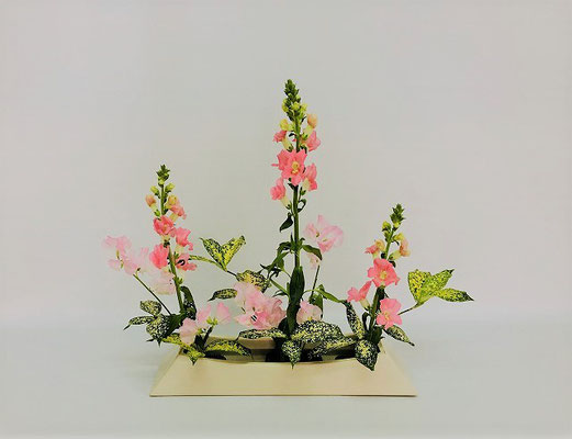 <スナップドラゴン スイートピー ゴッドセフィアナ> Chiakiさんの作品です。「ならぶかたち」のお稽古2回目。