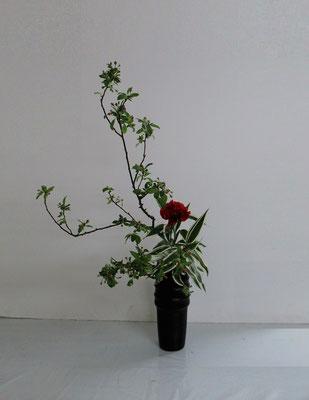 2019.5.15 <海棠(カイドウ) カーネーション ドラセナ・サンデリアーナ> Atsukoさんの作品です。面白い枝ぶりの海棠を瓶花で。