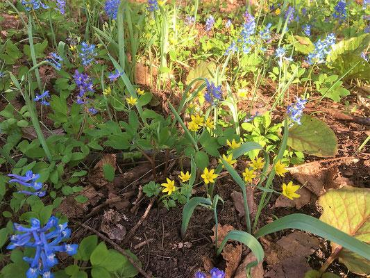 ここからは、三角山の小径の春の顔なじみです。
