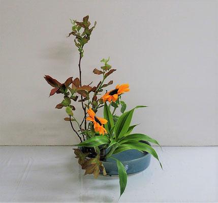 2020.6.17 <大葉ハゼ 向日葵(ヒマワリ) ドラセナサンデリアーナ> 直立型 Qianさんの作品です。