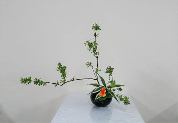 2019.5.15 <海棠 透かし百合 ドラセナ・サンデリアーナ> Rikuくんの作品です。花器を選び、自由に表現してもらいました。おおらかで伸び伸びとしているところが素敵だと思います。