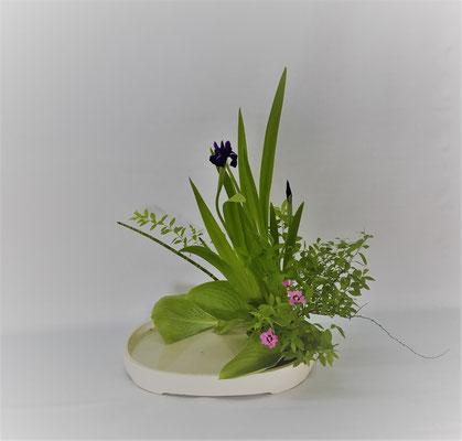 2019.6.18 <燕子花(カキツバタ) 雪柳 撫子 砥草(トクサ) 擬宝珠> Tamikoさんの作品です。燕子花が手に入りましたので写景盛花自然本位のお稽古です。撫子はカワラナデシコに見立てました。また、砥草は我が家の庭のものを使いました。新芽がまだ成長途中でで長く伸びていないため、後ろから前に向かうようにさり気なく使用しました。