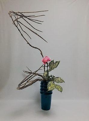 <キササゲ カーネーション ゴッドセフィアナ> Atsukoさんの作品です。