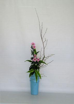 2020.1.21 <姫水木(日向水木) 小菊 ドラセナサンデリアーナ> Tamikoさんの作品です。