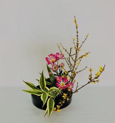 2/6<連翹(レンギョウ) 菊 ドラセナ・サンデリアーナ> Michiyoさんの作品です。