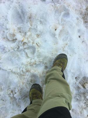 雪の上は、涼しくて気持ちがいいです。