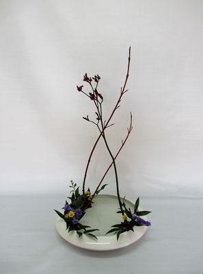 2020.11.17 <珊瑚水木 カンガルーポー 小菊 スターチス 笹葉ルスカス> Chiakiさんの作品です。補材がありましたので、こんな時には「花奏」のお稽古です。