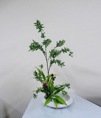 2020.3.25 <コデマリ 薊(アザミ) ドラセナサンデリアーナ> Akikoさんの作品です。コデマリを伸びやかに表現してくれました。